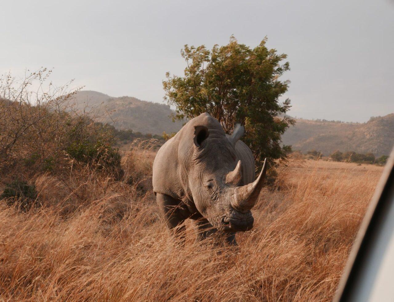 SUDAFRICA passando al Nord